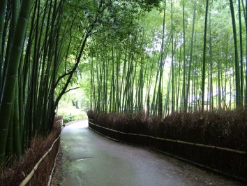 Bamboo forest pathway